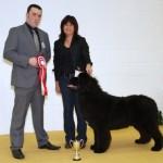 Best Puppy Club Open Show 2013